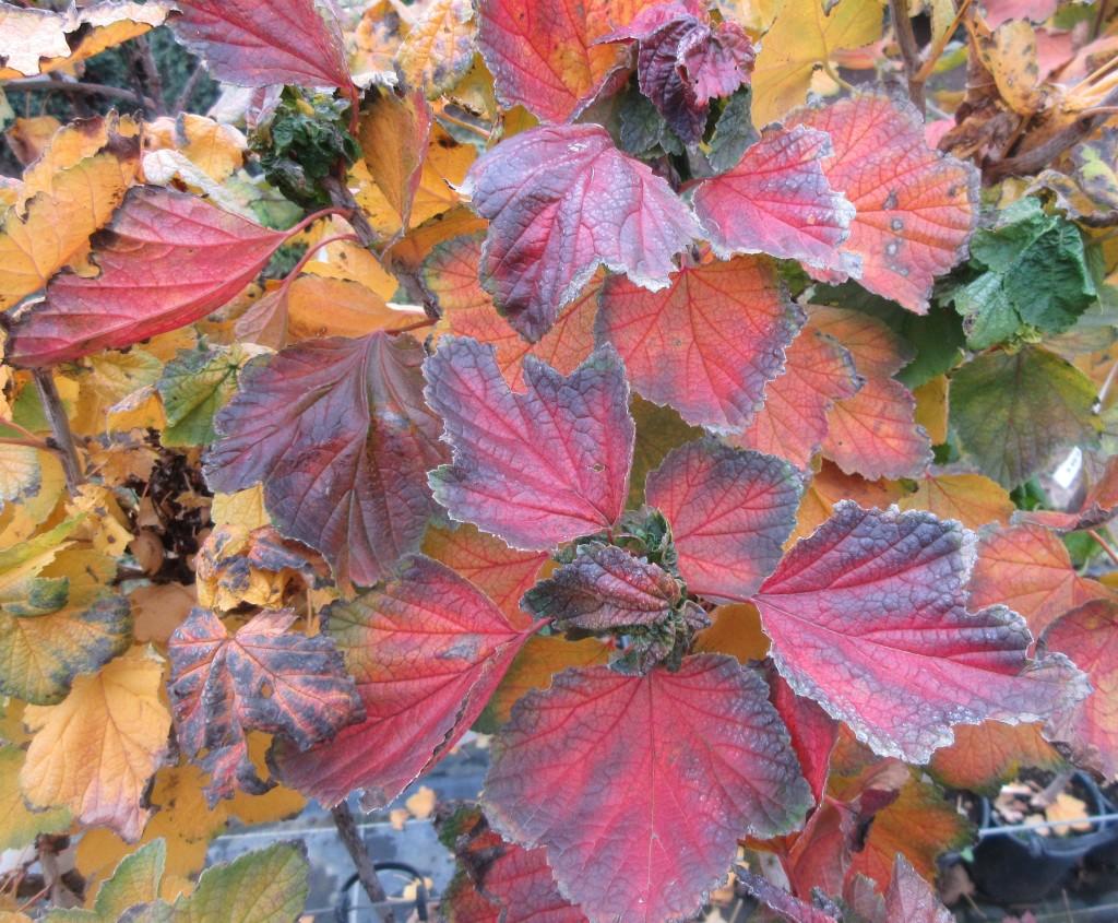 Herbstlaub3