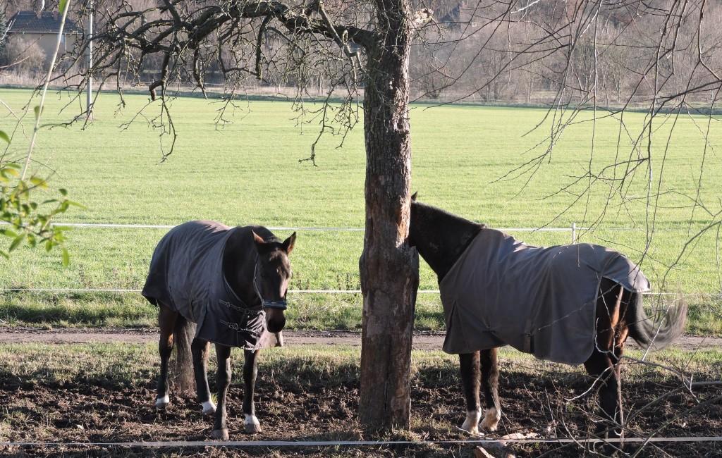 OldPferde1