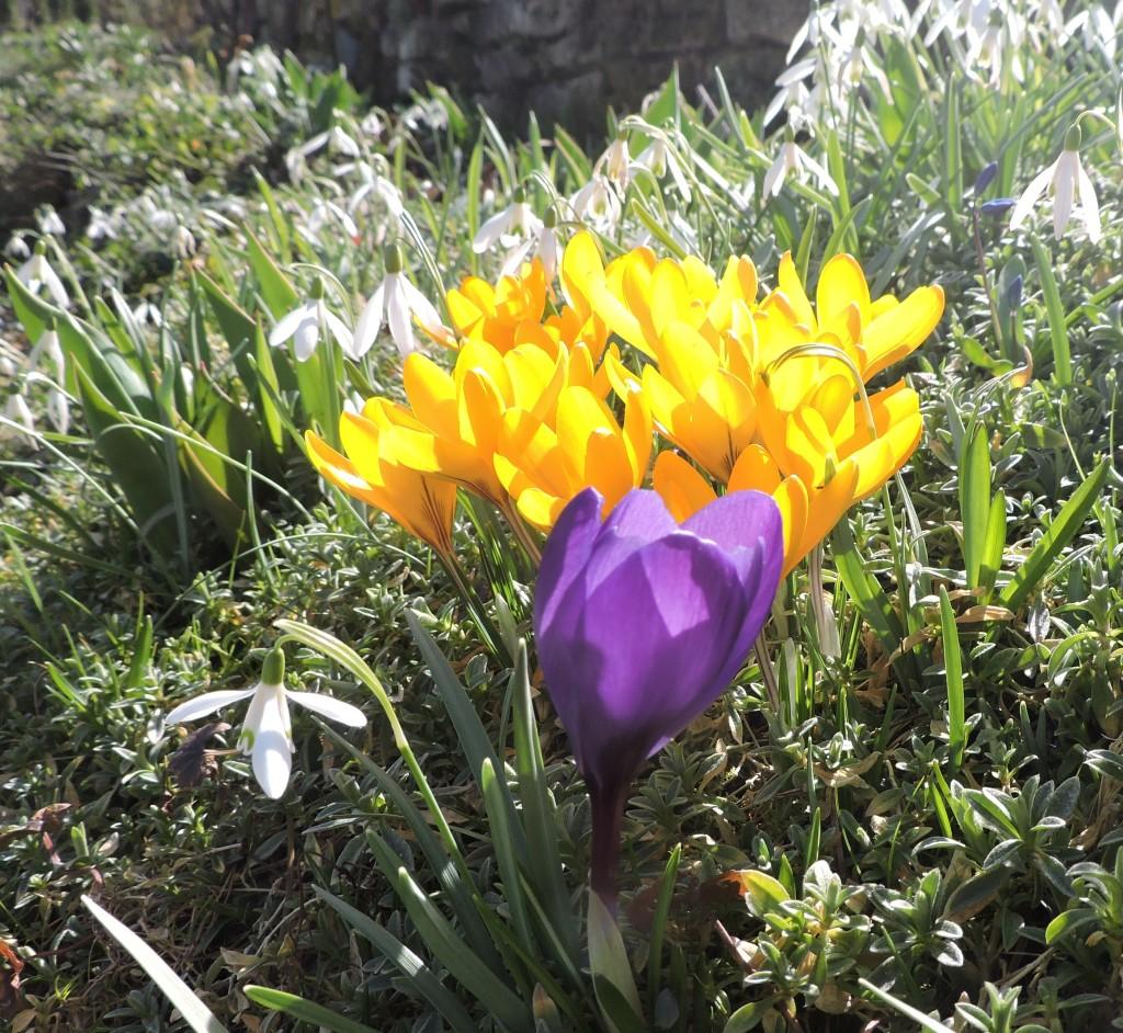Frühlingsblumen1