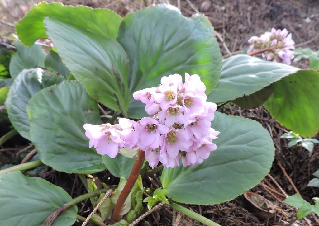 Frühlingsblumen4