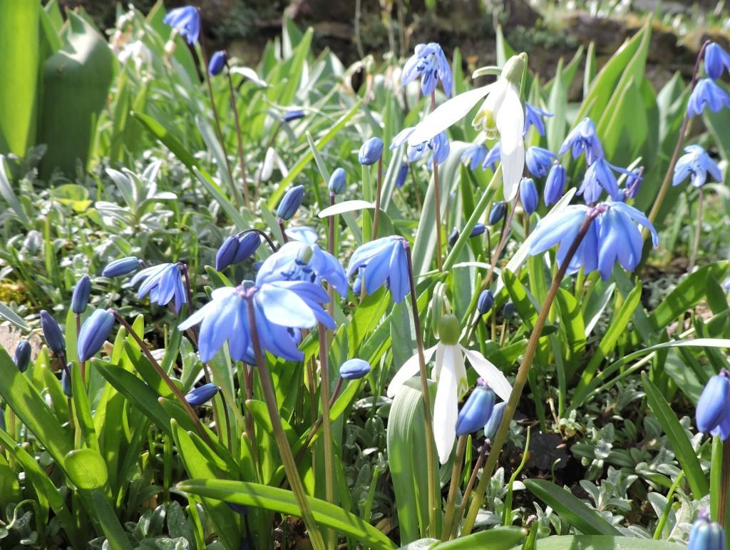 Frühlingsblumen6