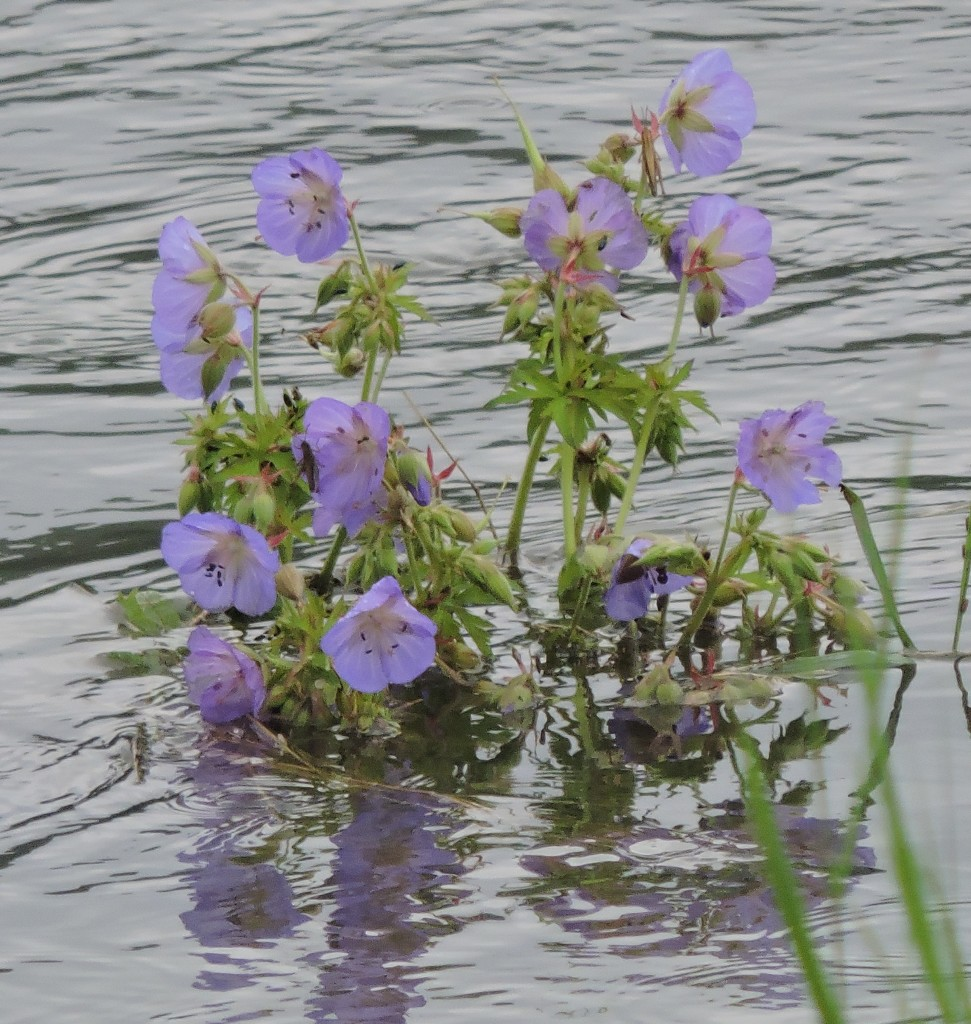Hochwasser177