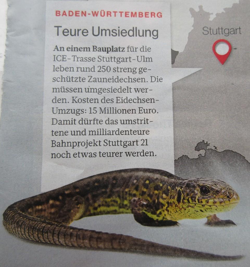 ZauneidechsenStuttgart1