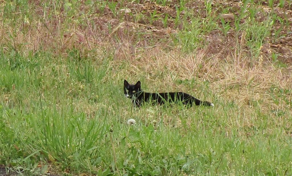KatzeSan1