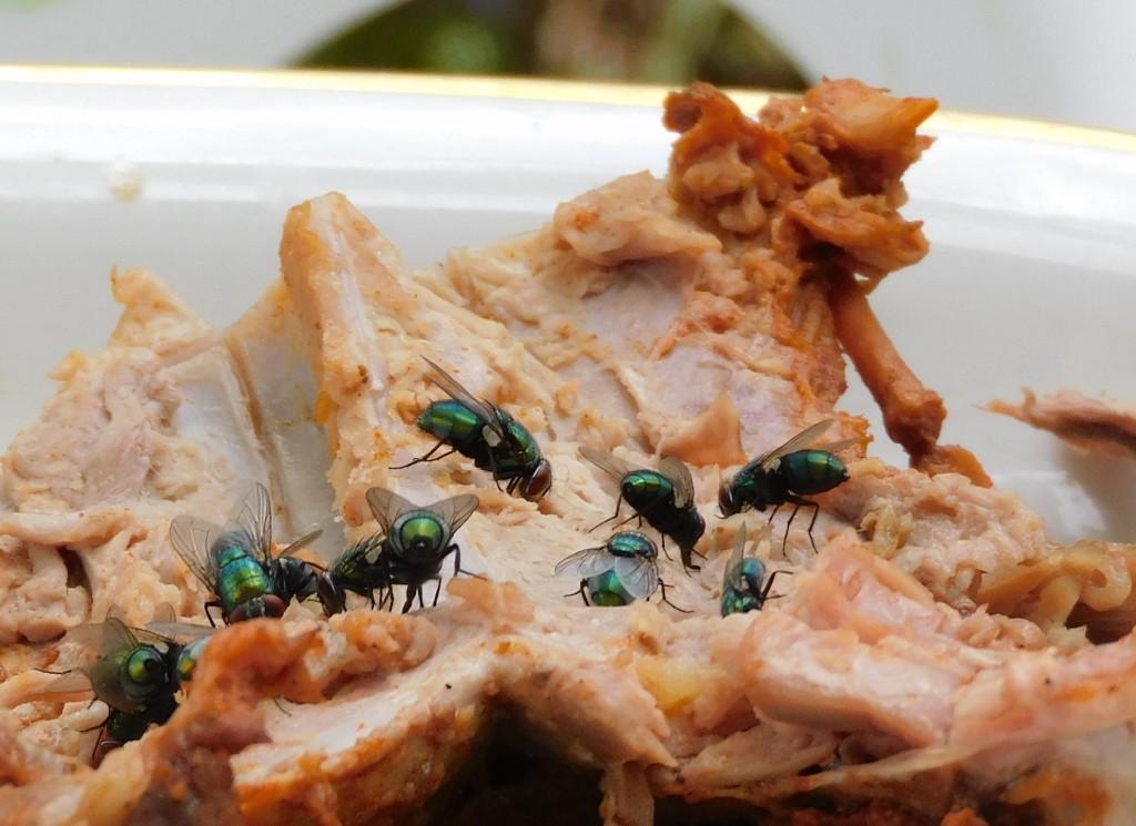 Schmeißfliegengrüne1