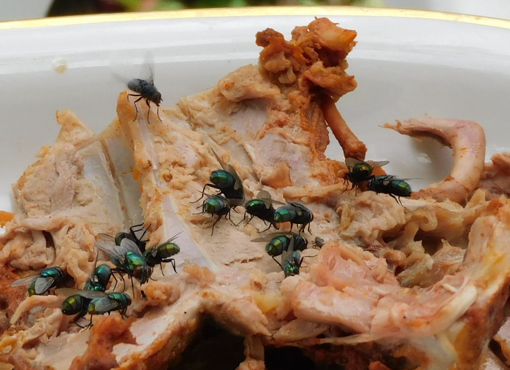 Schmeißfliegengrüne2