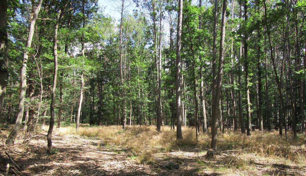 Waldlichtung1
