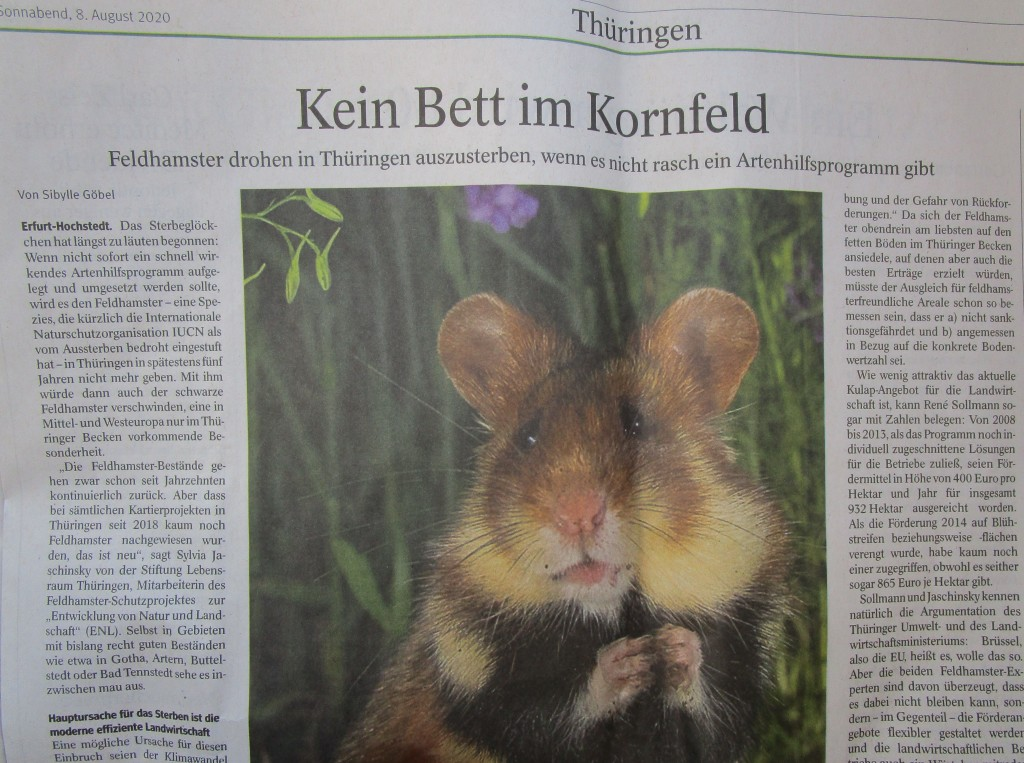 Hamster20TA1