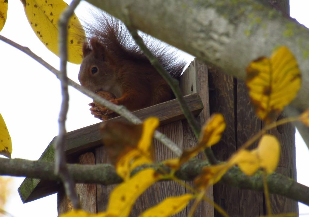 Eichhörnchen2