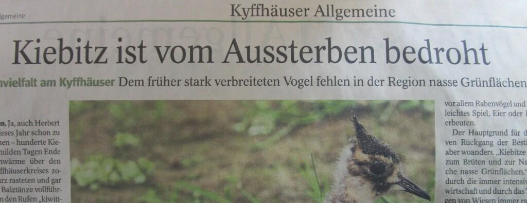 KiebitzAussterben21